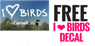 FREE I Love Birds Decal
