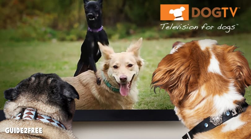 FREE 30 Day Trial of DOGTV