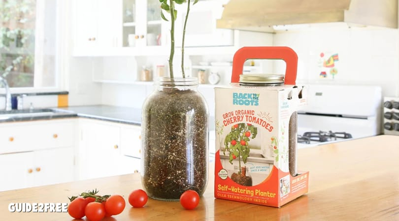 FREE Windowsill Tomato Planter